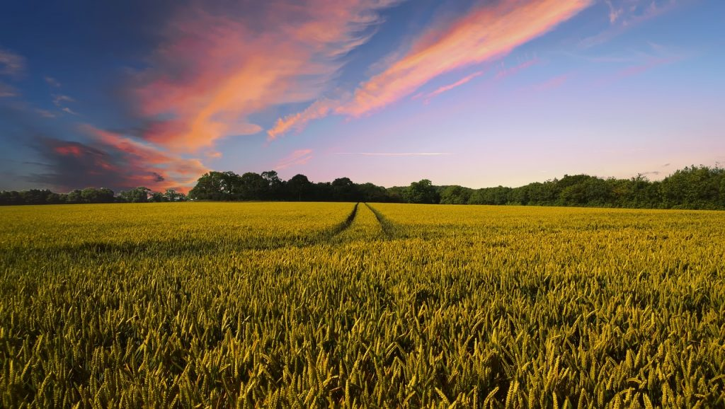 picture of countryside as a symbol of soil health