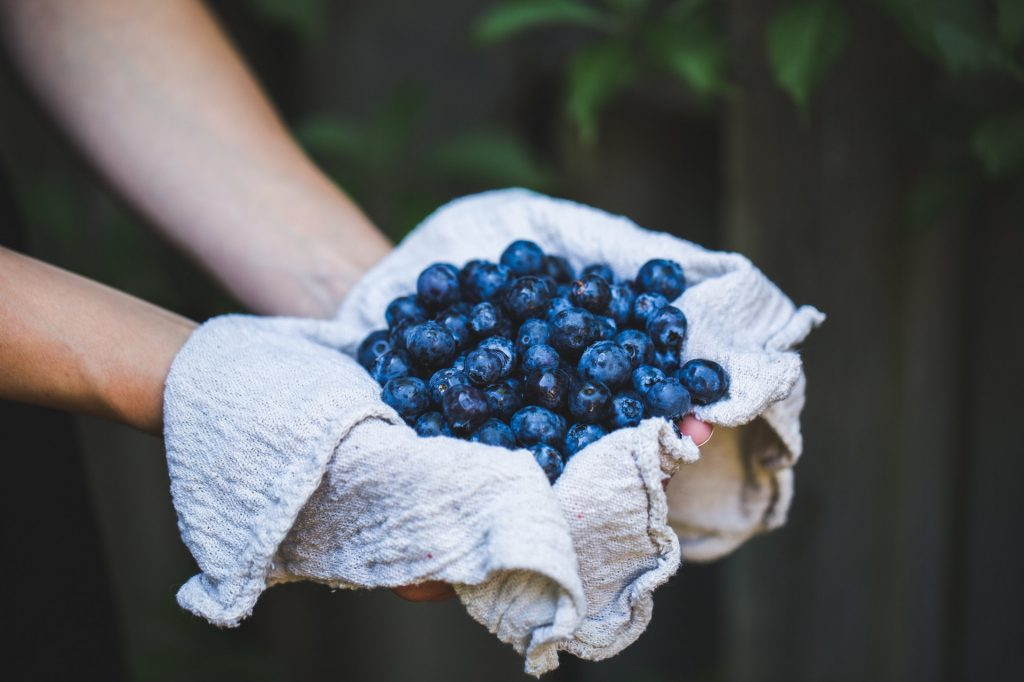 picture of hands holding some blueberries good food