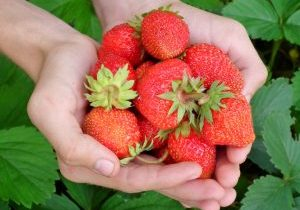picture of hands holding strawberries as a symbol of food products