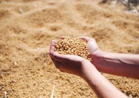 picture of hand holding seed supply